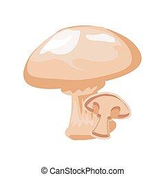 mushroom fresh on white background