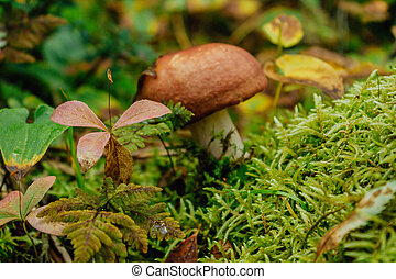 Mushroom growing from the moss in the autumn forest