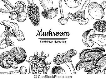 Mushroom hand drawn vector frame. Isolated Sketch organic food drawing template. Champignon, morel, truffle, enokitake, porcini, oyster, chanterelle, shiitake. Great for menu label product packaging