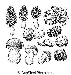 Mushroom hand drawn vector illustration. Sketch food drawing...
