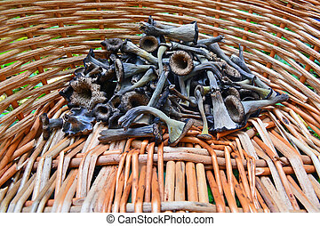 mushroom harvesting, horn of plenty - the horn of plenty...