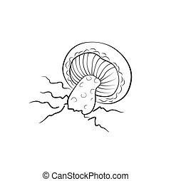 Mushroom illustration, vector. Amanita, death cap mushroom...