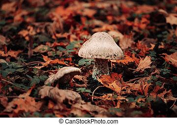 Mushroom in bright fallen leaves in autumn. Beautiful fall scene.