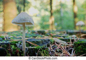 Mushroom in fall woods