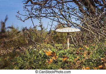 mushroom in forest autumn