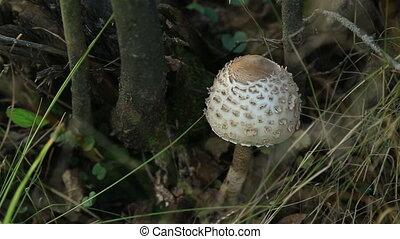 Mushroom in forest - White mushroom in forest, HD