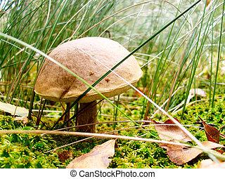 Mushroom in long green grass