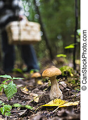 mushroom in the forest with a shallow depth of field