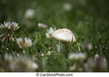 Mushroom in the grass