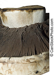 mushroom macro #3