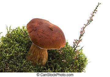 mushroom, moss, slug and heather isolated on white -...