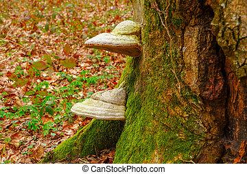 Mushroom on a tree close-up