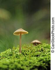 mushroom on moss macro