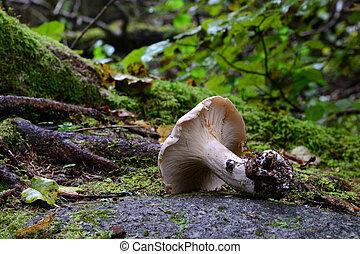 Mushroom on the rock