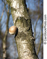 Mushroom on Tree
