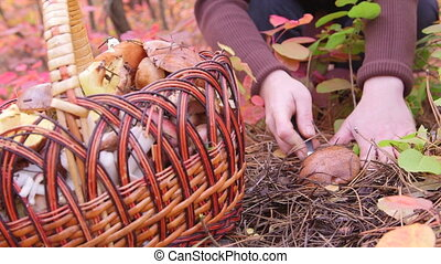 Mushroom Picking - woman picking mushroom in the forest