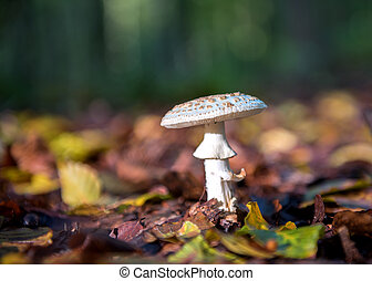 mushroom in the forest