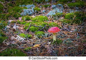 mushroom red fly agaric grows in moss