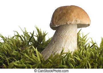 mushroom close-up on white background