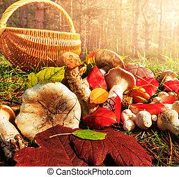 Mushroom - mushrooms in fall season