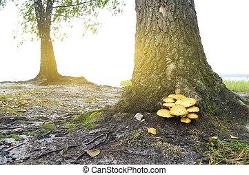 mushroom under a tree.