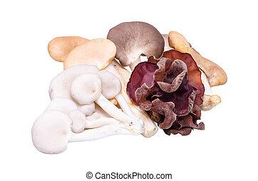 Mushroom varieties over white background