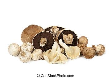 Mushroom Varieties over White - Mushroom varieties over...