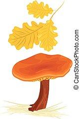 Mushroom with oak leaves