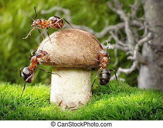 mushrooming, fourmis, équipe