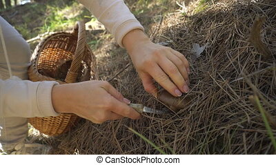 Mushrooming, woman picking mushrooms in the forest -...