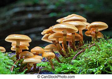 Mushrooms - A close-up of a bunlde of mushrooms growing on ...