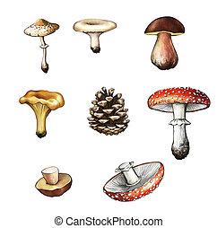 Mushrooms. Amanita, grebe, cep, boletus, chanterelle, bump, champignon, fir-cone. Isolated Illustartion on white background.
