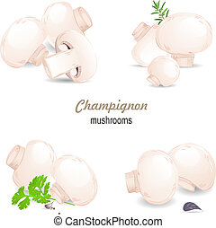 mushrooms champignon with herbs for your design