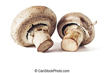 Mushrooms champignons