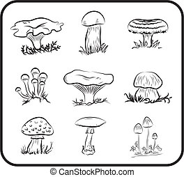 mushrooms - Compilation of vector illustrations of mushrooms...