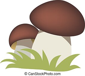 mushrooms - Fresh mushroom in two pieces isolated on white...