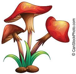 mushrooms - illustration of red mushrooms on a white...