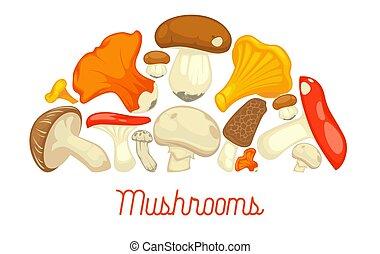 Mushrooms edible mushrooming poster. Vector flat champignon...
