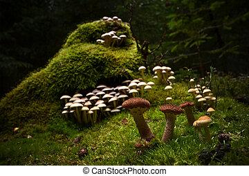 mushrooms forest gather boletus chanterelle moss magical