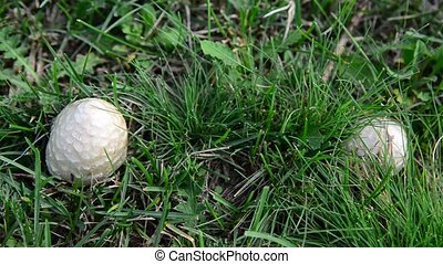mushrooms growing in meadow