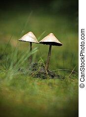 mushrooms growing in moss
