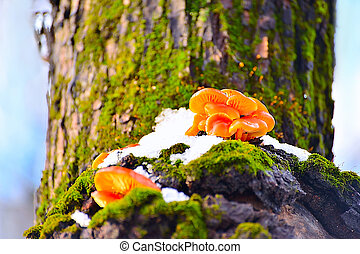 Mushrooms growing on a tree in winter