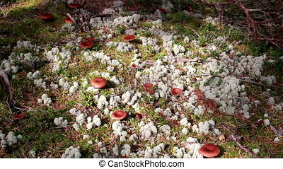 Mushrooms growing on the ground