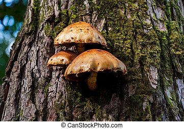 Mushrooms growing on the tree
