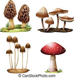 Mushrooms - Illustration of the mushrooms on a white...
