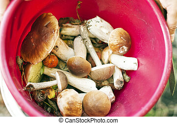 mushrooms in a bucket