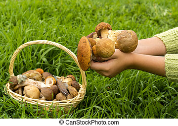 Mushrooms in a wicker basket and a knife on a background of green lawn. The hands of a girl in a green sweater hold a handful of mushrooms. Forest harvesting season. Focus on mushrooms in hands.