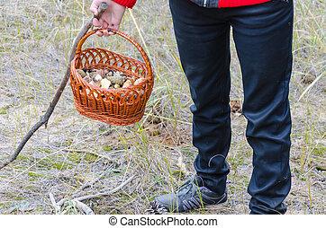 Mushrooms in a wicker basket in human hands