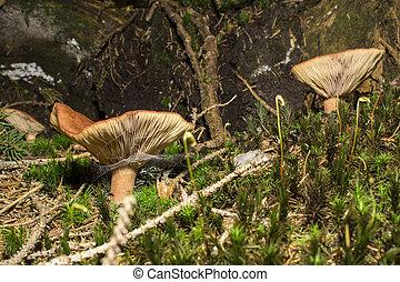 Mushrooms in close up