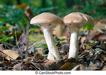 Mushrooms in forest